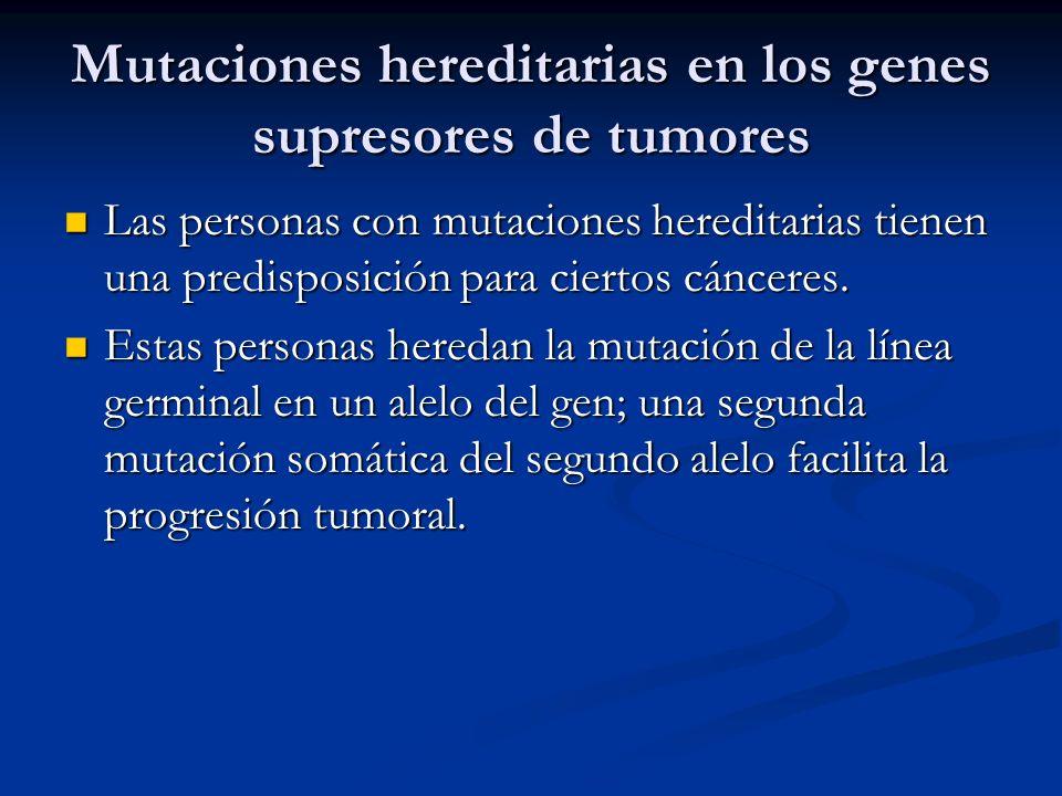 Mutaciones hereditarias en los genes supresores de tumores Las personas con mutaciones hereditarias tienen una predisposición para ciertos cánceres. L