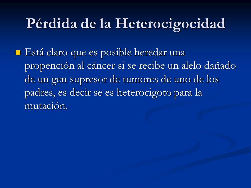 Pérdida de la Heterocigocidad Está claro que es posible heredar una propención al cáncer si se recibe un alelo dañado de un gen supresor de tumores de