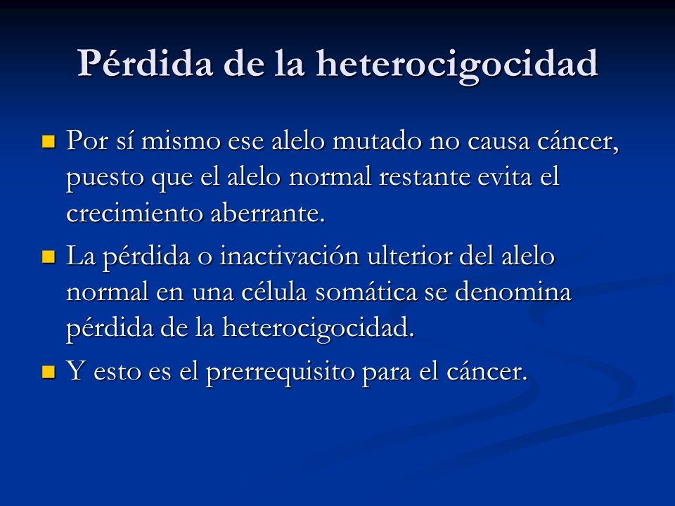 Pérdida de la heterocigocidad Por sí mismo ese alelo mutado no causa cáncer, puesto que el alelo normal restante evita el crecimiento aberrante.