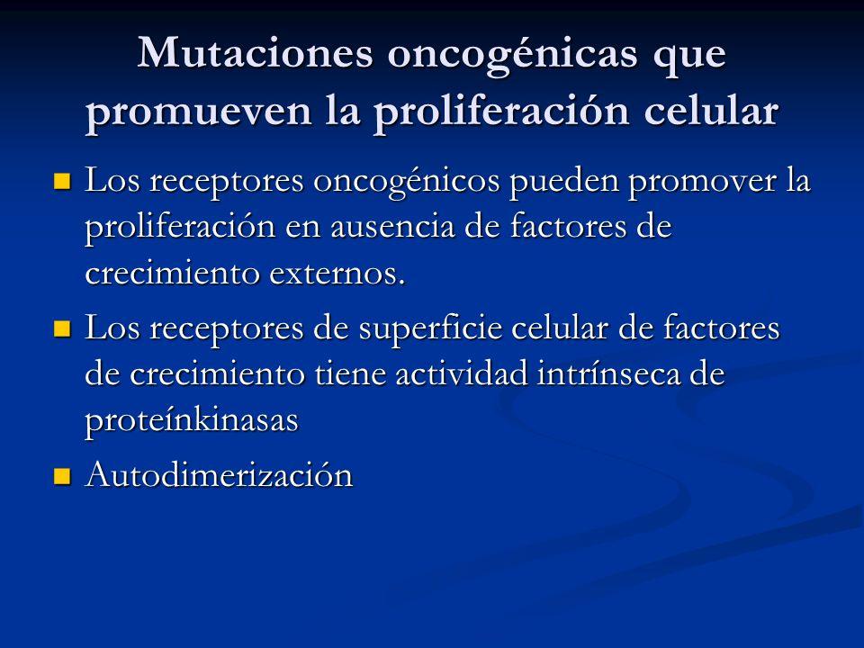 Mutaciones oncogénicas que promueven la proliferación celular Los receptores oncogénicos pueden promover la proliferación en ausencia de factores de crecimiento externos.