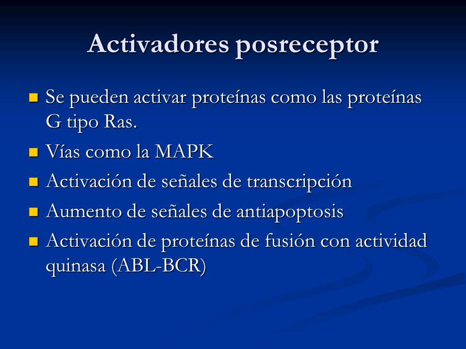 Activadores posreceptor Se pueden activar proteínas como las proteínas G tipo Ras. Se pueden activar proteínas como las proteínas G tipo Ras. Vías com