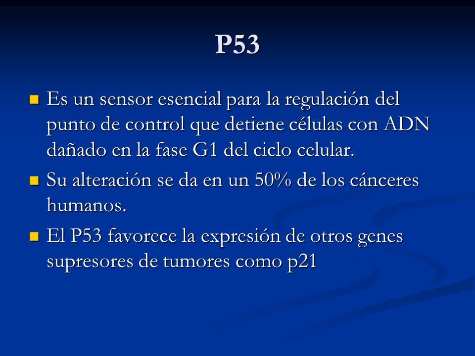 P53 Es un sensor esencial para la regulación del punto de control que detiene células con ADN dañado en la fase G1 del ciclo celular. Es un sensor ese