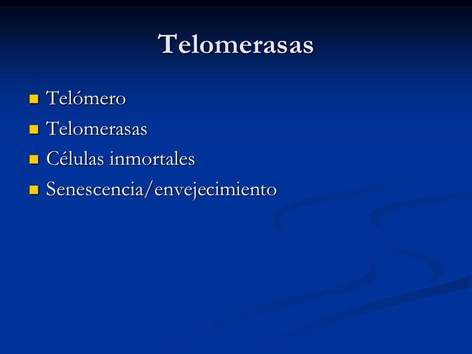 Telomerasas Telómero Telómero Telomerasas Telomerasas Células inmortales Células inmortales Senescencia/envejecimiento Senescencia/envejecimiento