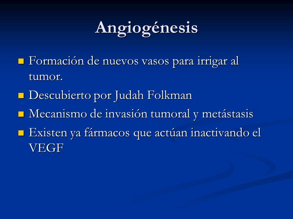 Angiogénesis Formación de nuevos vasos para irrigar al tumor. Formación de nuevos vasos para irrigar al tumor. Descubierto por Judah Folkman Descubier