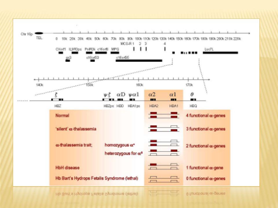 α -3,7 o supresion a la derecha -α 4,2 o delecion hacia la izquierda α IVSI(-5 nt) Mutaciones del sitio de poliadenilacion, α 2 AATAAG ;α 2 AATGAA ; α 2 AATA Mutacion en codon de terminacion conducen a variantes prolongadas de Hb como Icaria Hb, Hb Seal Rock Mutaciones estructurales como Hb Quong Sze, Hb Petah Deleciones en los genes ξ y α Region reguladora MCS-R2(HS-40) del RNAm α + - talasemia debido a deleciones.