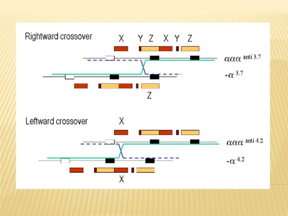 Conteo completo de sangre con indices de celulas rojas HPLC Electroforesis Medicion de tasas de sintesis de cadena α/β globina Analisis molecular