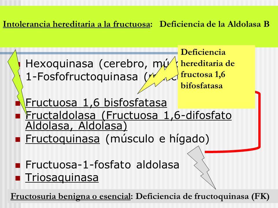Enzimas del metabolismo de Fructuosa: Hexoquinasa (cerebro, músculo) 1-Fosfofructoquinasa (músculo) Fructuosa 1,6 bisfosfatasa Fructaldolasa (Fructuos
