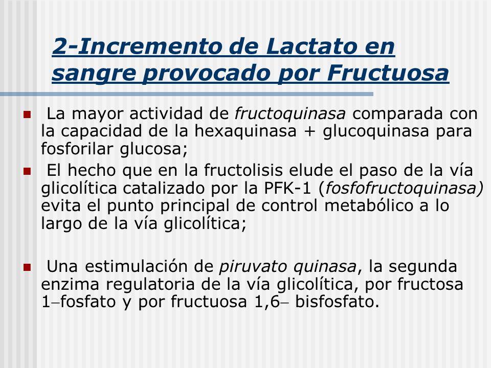 2-Incremento de Lactato en sangre provocado por Fructuosa La mayor actividad de fructoquinasa comparada con la capacidad de la hexaquinasa + glucoquin