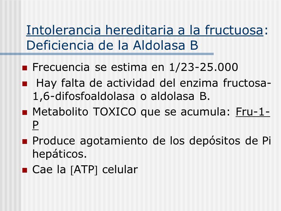 Intolerancia hereditaria a la fructuosa: Deficiencia de la Aldolasa B Frecuencia se estima en 1/23-25.000 Hay falta de actividad del enzima fructosa-
