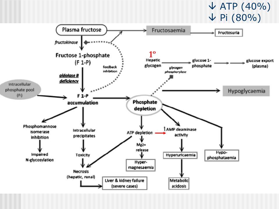 ATP (40%) Pi (80%) 1º