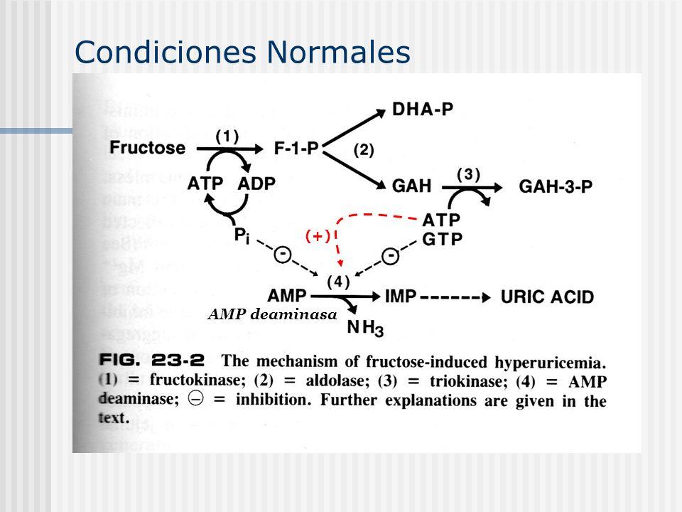 AMP deaminasa Condiciones Normales (+)