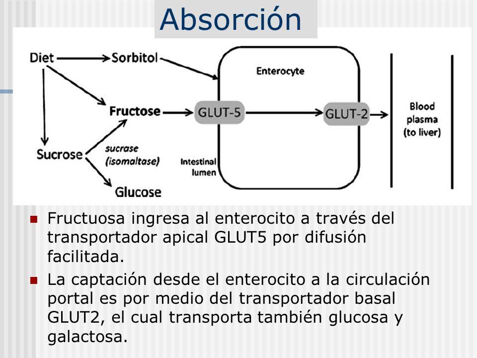 Intolerancia hereditaria a la fructuosa: Deficiencia de la Aldolasa B Frecuencia se estima en 1/23-25.000 Hay falta de actividad del enzima fructosa- 1,6-difosfoaldolasa o aldolasa B.