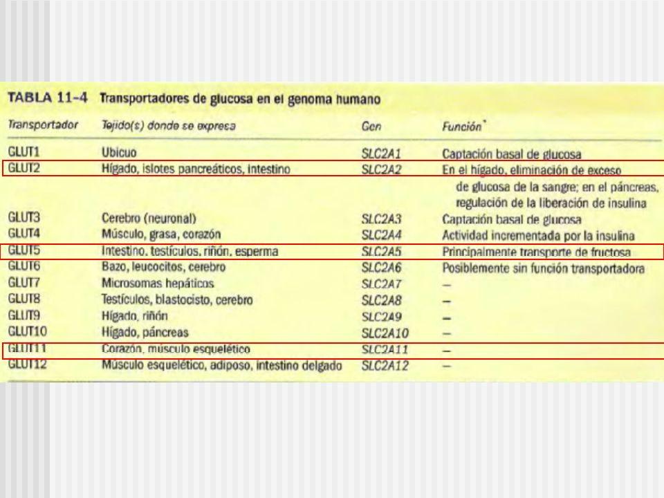 Algunos efectos tóxicos observados con hiperfructosemia Acido Úrico Acido Láctico Magnasemia Fosfatemia Glucemia Acidosis metabólica