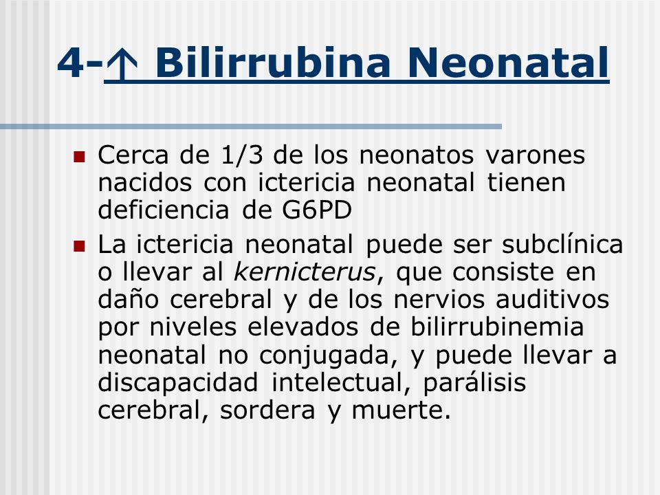 4- Bilirrubina Neonatal Cerca de 1/3 de los neonatos varones nacidos con ictericia neonatal tienen deficiencia de G6PD La ictericia neonatal puede ser