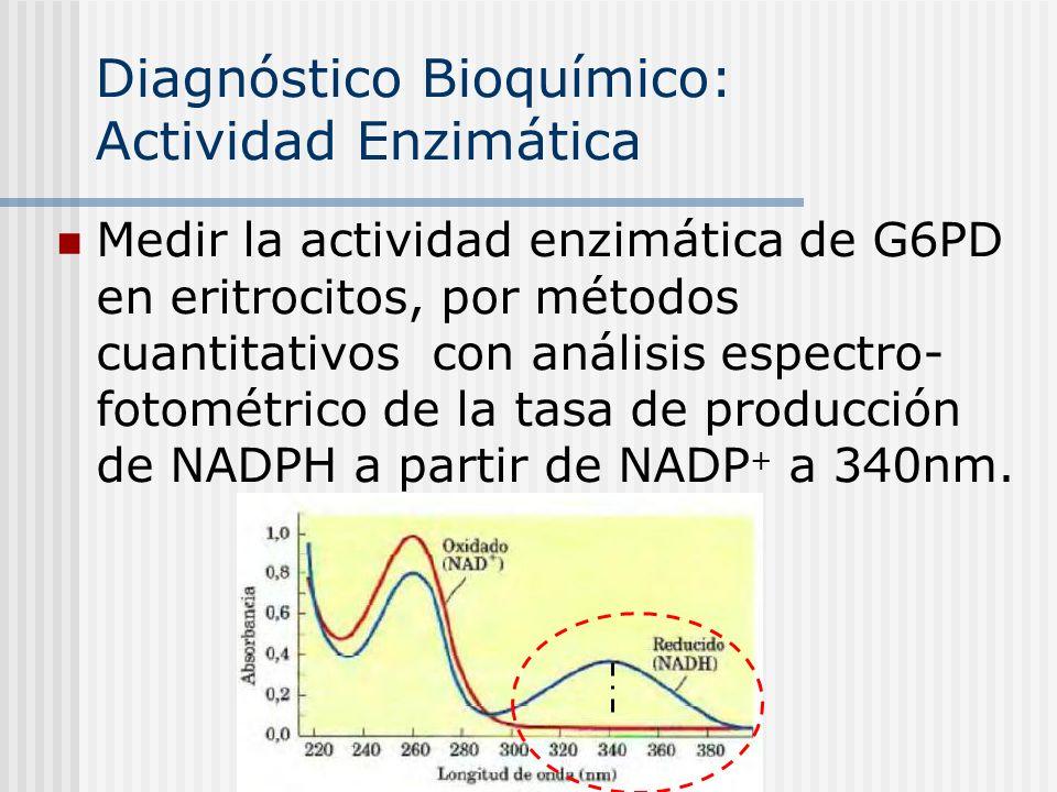 Diagnóstico Bioquímico: Actividad Enzimática Medir la actividad enzimática de G6PD en eritrocitos, por métodos cuantitativos con análisis espectro- fo