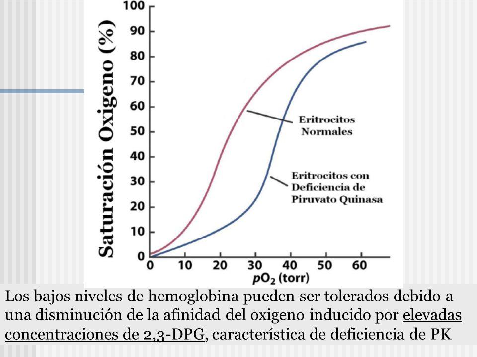Los bajos niveles de hemoglobina pueden ser tolerados debido a una disminución de la afinidad del oxigeno inducido por elevadas concentraciones de 2,3