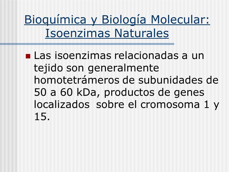 Bioquímica y Biología Molecular: Isoenzimas Naturales Las isoenzimas relacionadas a un tejido son generalmente homotetrámeros de subunidades de 50 a 6