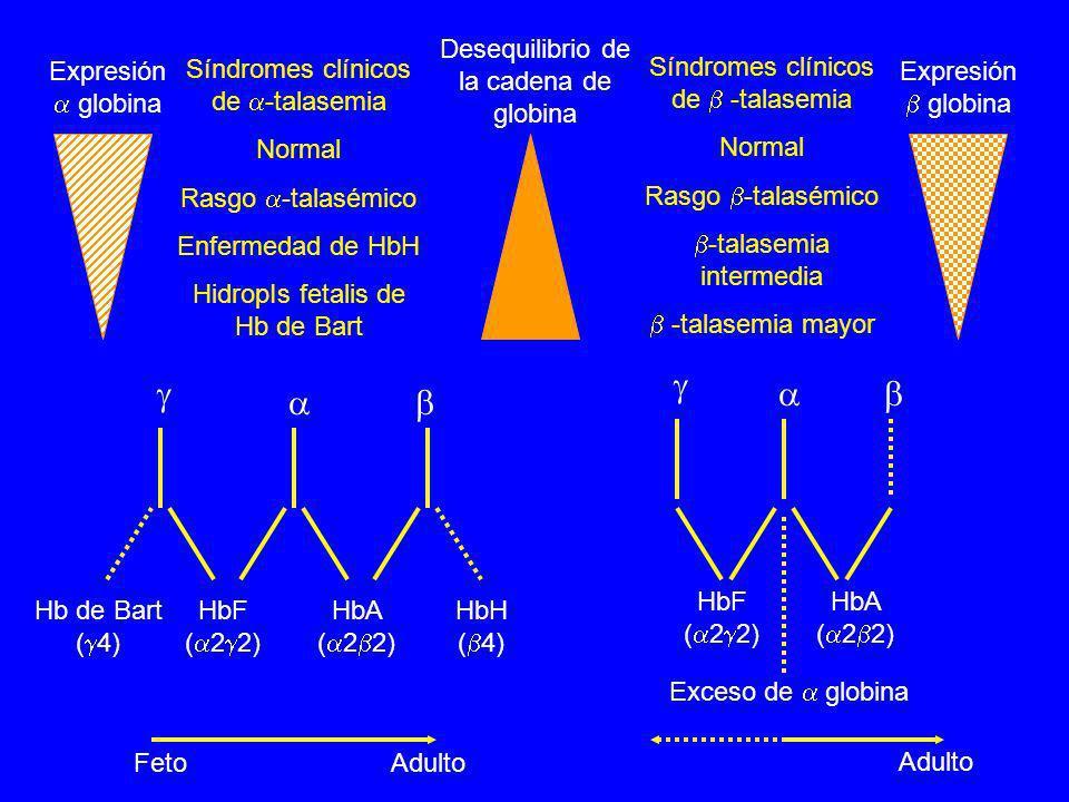 Expresión globina Desequilibrio de la cadena de globina Síndromes clínicos de -talasemia Normal Rasgo -talasémico Enfermedad de HbH HidropIs fetalis d
