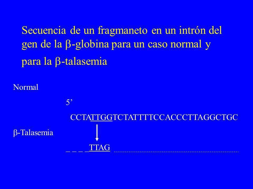 Secuencia de un fragmaneto en un intrón del gen de la -globina para un caso normal y para la -talasemia Normal 5 CCTATTGGTCTATTTTCCACCCTTAGGCTGC -Tala
