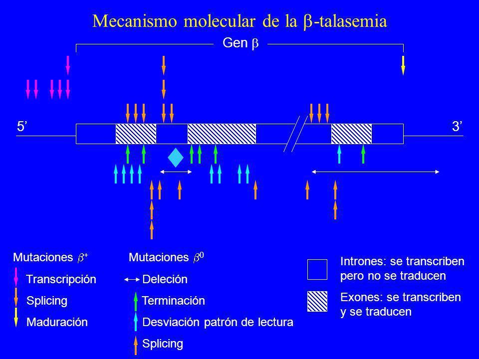 Mecanismo molecular de la -talasemia 53 Gen Mutaciones + Transcripción Splicing Maduración Mutaciones 0 Deleción Terminación Desviación patrón de lect