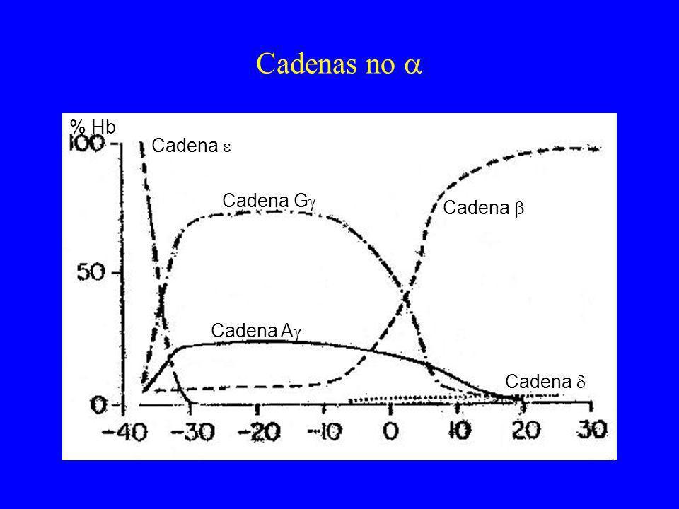Cadenas no % Hb Cadena Cadena G Cadena A Cadena