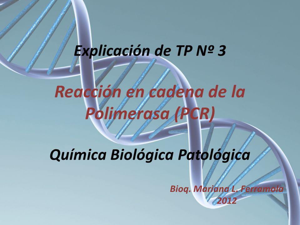 Etapas de un ciclo de PCR. 94ºC Tm Primers 72ºC (min)
