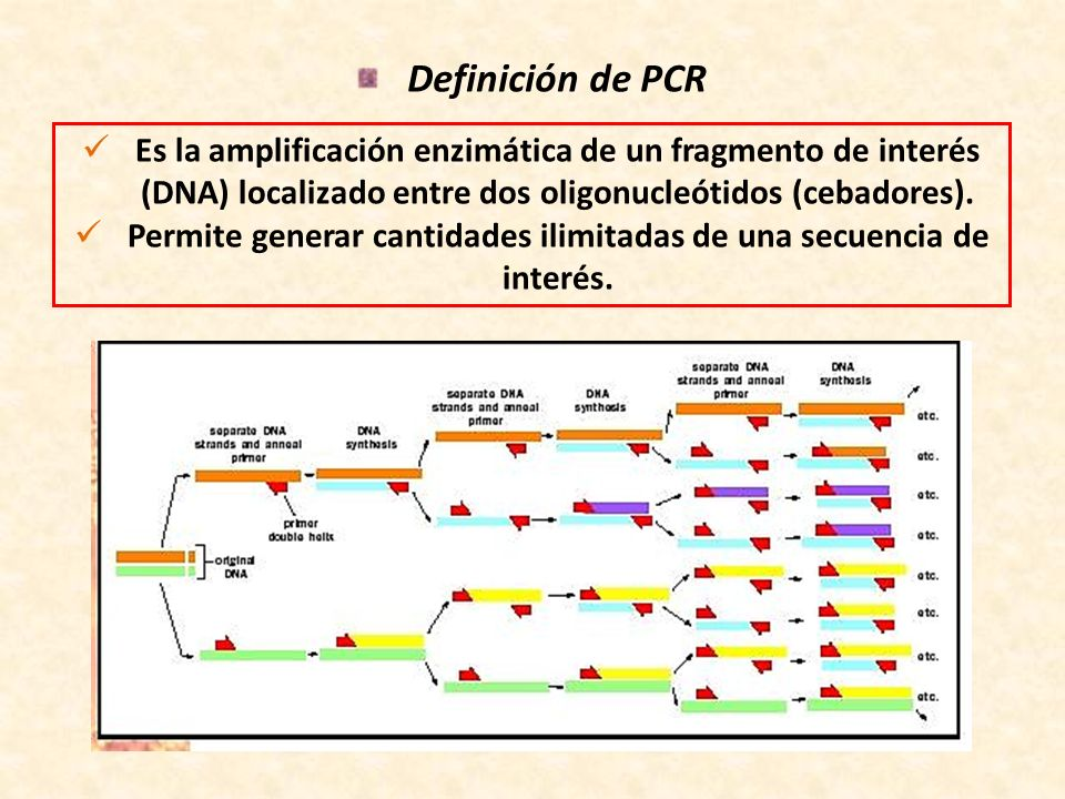 PCR anidada Consiste en amplificar un blanco con un par de cebadores, y en una reacción posterior amplificar una fracción interna del fragmento previamente amplificado.