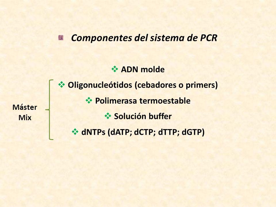 Componentes del sistema de PCR: ADN molde El ADN molde puede ser de cadena sencilla o doble, circular o lineal.