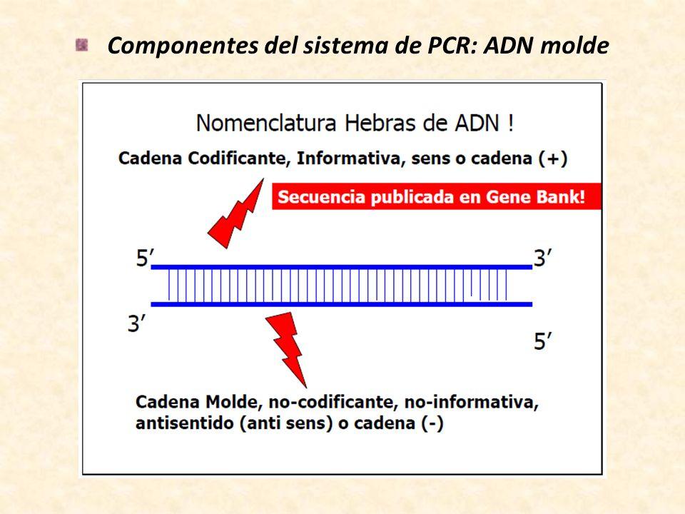 Componentes del sistema de PCR: cebadores Longitud de la región complementaria al ADN molde de entre 18-25pb.