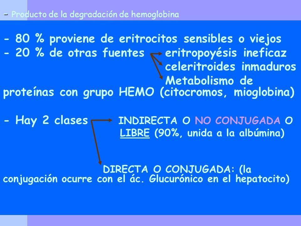 - - Producto de la degradación de hemoglobina - 80 % proviene de eritrocitos sensibles o viejos - 20 % de otras fuentes eritropoyésis ineficaz celerit