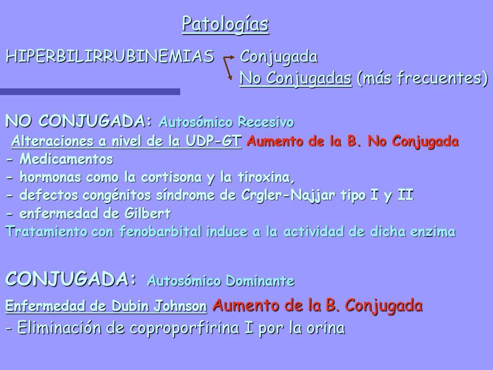 Patologías HIPERBILIRRUBINEMIAS Conjugada No Conjugadas (más frecuentes) No Conjugadas (más frecuentes) NO CONJUGADA: Autosómico Recesivo Alteraciones