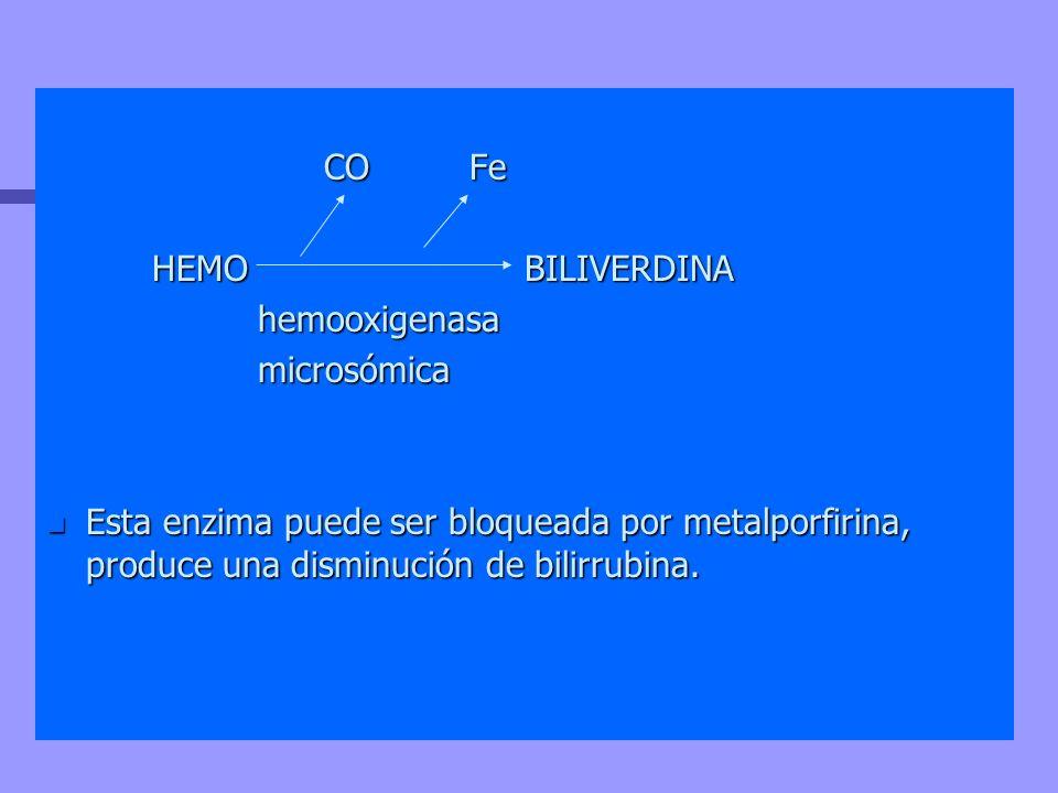 COFe COFe HEMO BILIVERDINA hemooxigenasamicrosómica n Esta enzima puede ser bloqueada por metalporfirina, produce una disminución de bilirrubina.