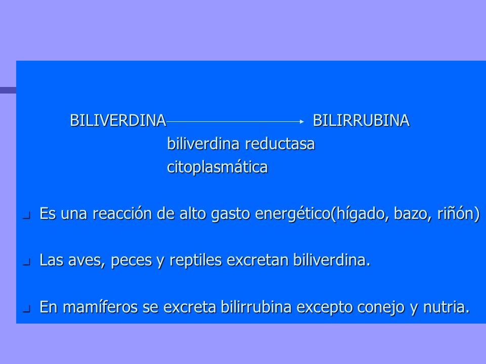 BILIVERDINA BILIRRUBINA biliverdina reductasa citoplasmática n Es una reacción de alto gasto energético(hígado, bazo, riñón) n Las aves, peces y repti
