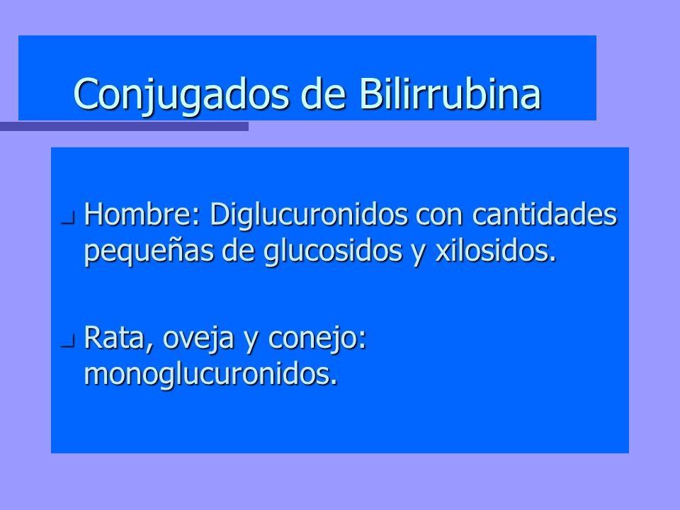 Conjugados de Bilirrubina n Hombre: Diglucuronidos con cantidades pequeñas de glucosidos y xilosidos. n Rata, oveja y conejo: monoglucuronidos.