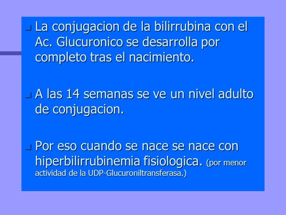 n La conjugacion de la bilirrubina con el Ac. Glucuronico se desarrolla por completo tras el nacimiento. n A las 14 semanas se ve un nivel adulto de c
