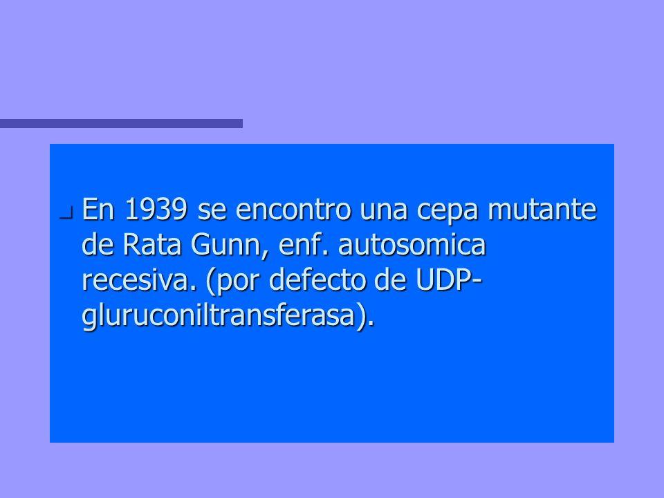 n En 1939 se encontro una cepa mutante de Rata Gunn, enf. autosomica recesiva. (por defecto de UDP- gluruconiltransferasa).