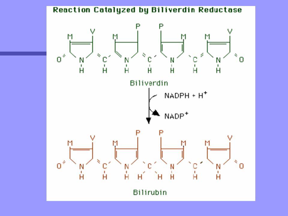n El UDP-gluruconiltransferasa se veria regulado por la presencia de N-acetilglucosamina y tambien por diversos factores hormonales.