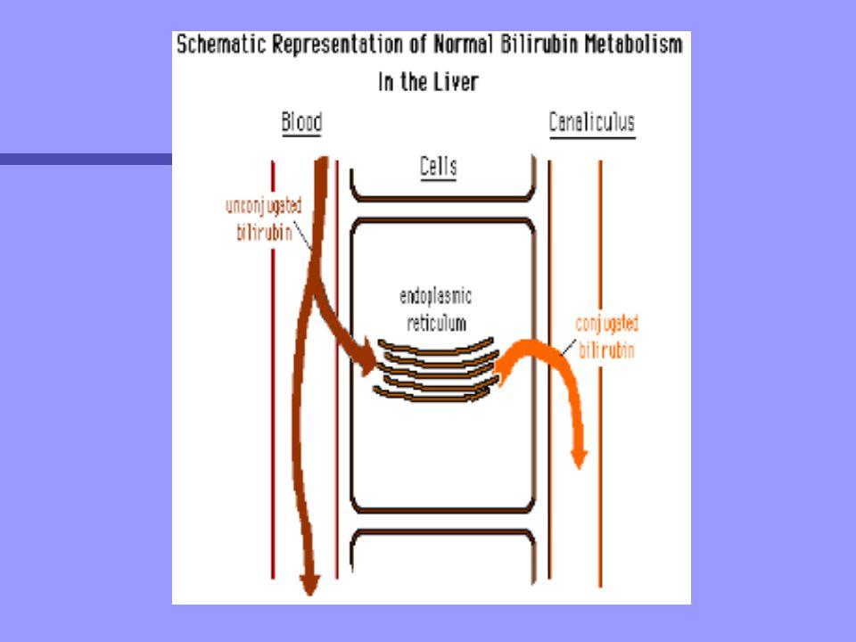 n En el interior del hepatocito se puede unir a dos proteínas: –Y o ligandina: función seria evitar el reflujo del pigmento –prot.