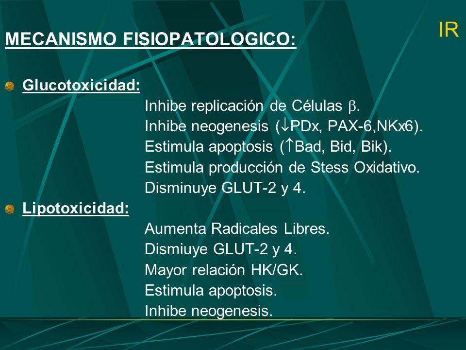 IR MECANISMO FISIOPATOLOGICO: Glucotoxicidad: Inhibe replicación de Células. Inhibe neogenesis ( PDx, PAX-6,NKx6). Estimula apoptosis ( Bad, Bid, Bik)
