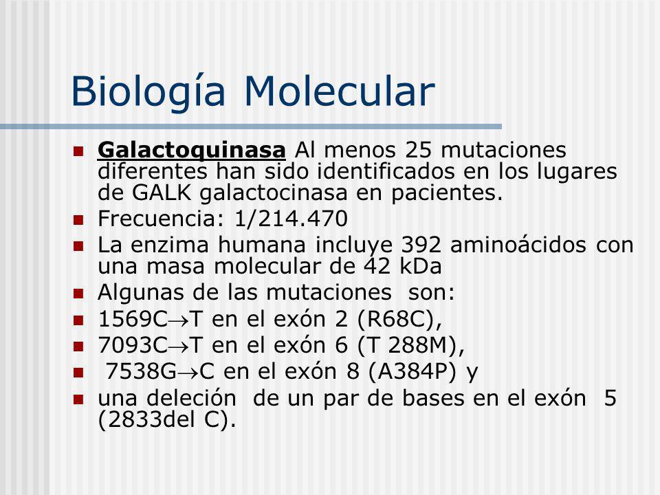 Biología Molecular Galactoquinasa Al menos 25 mutaciones diferentes han sido identificados en los lugares de GALK galactocinasa en pacientes. Frecuenc