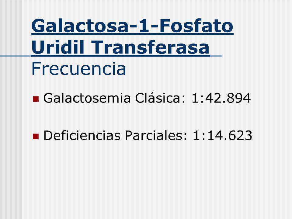 Galactosa-1-Fosfato Uridil Transferasa Frecuencia Galactosemia Clásica: 1:42.894 Deficiencias Parciales: 1:14.623