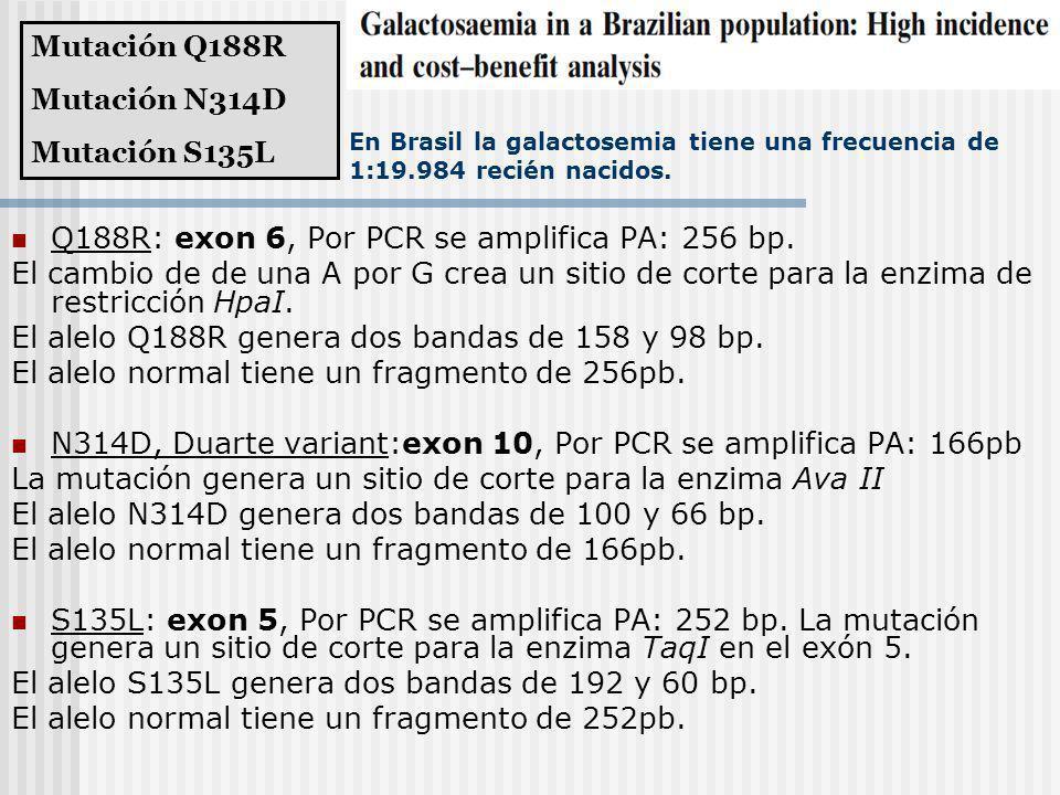 En Brasil la galactosemia tiene una frecuencia de 1:19.984 recién nacidos. Q188R: exon 6, Por PCR se amplifica PA: 256 bp. El cambio de de una A por G