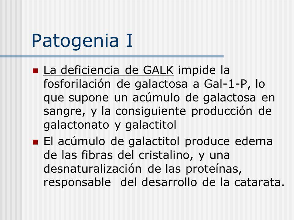 Patogenia I La deficiencia de GALK impide la fosforilación de galactosa a Gal-1-P, lo que supone un acúmulo de galactosa en sangre, y la consiguiente