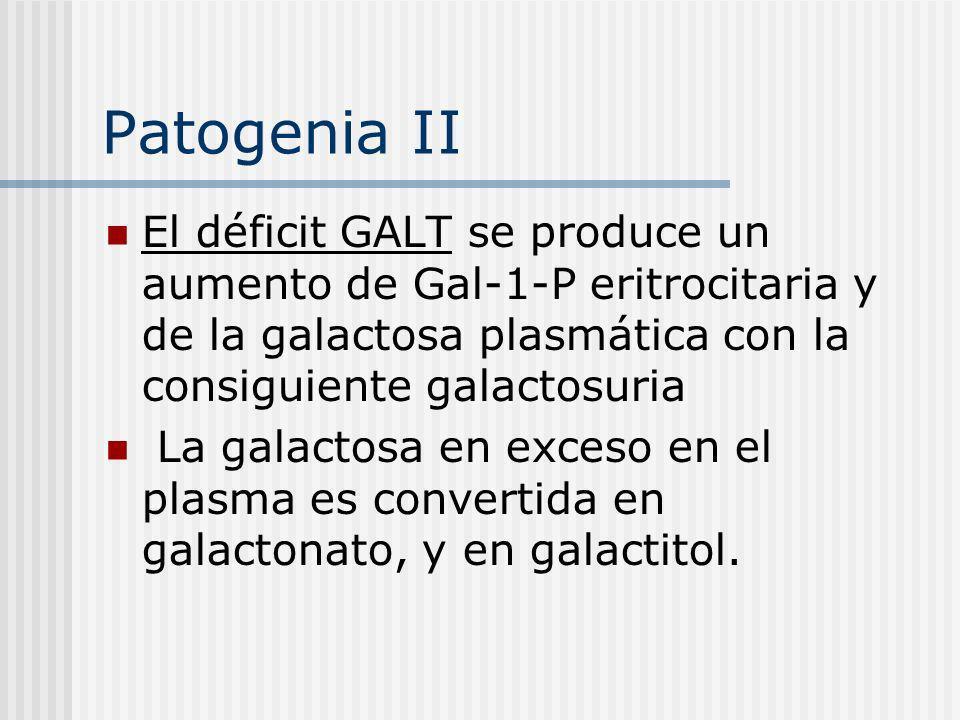 Patogenia II El déficit GALT se produce un aumento de Gal-1-P eritrocitaria y de la galactosa plasmática con la consiguiente galactosuria La galactosa