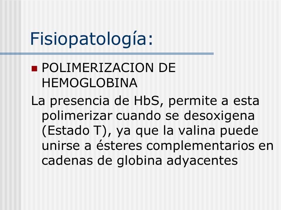 Fisiopatología: POLIMERIZACION DE HEMOGLOBINA La presencia de HbS, permite a esta polimerizar cuando se desoxigena (Estado T), ya que la valina puede unirse a ésteres complementarios en cadenas de globina adyacentes