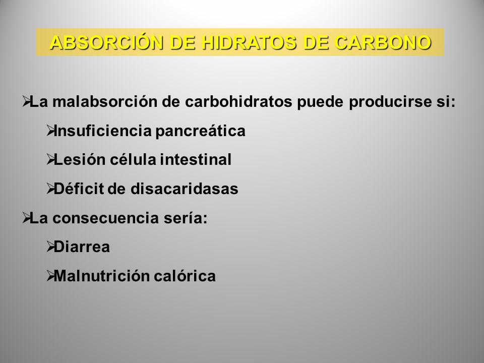 ABSORCIÓN DE HIDRATOS DE CARBONO La malabsorción de carbohidratos puede producirse si: Insuficiencia pancreática Lesión célula intestinal Déficit de d