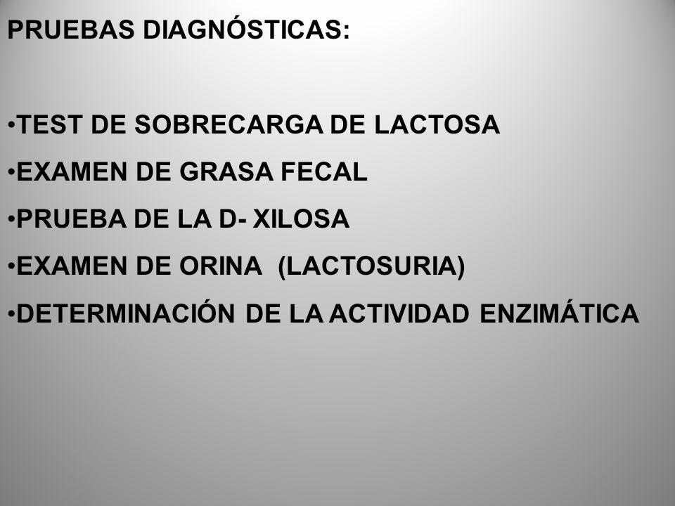 PRUEBAS DIAGNÓSTICAS: TEST DE SOBRECARGA DE LACTOSA EXAMEN DE GRASA FECAL PRUEBA DE LA D- XILOSA EXAMEN DE ORINA (LACTOSURIA) DETERMINACIÓN DE LA ACTI