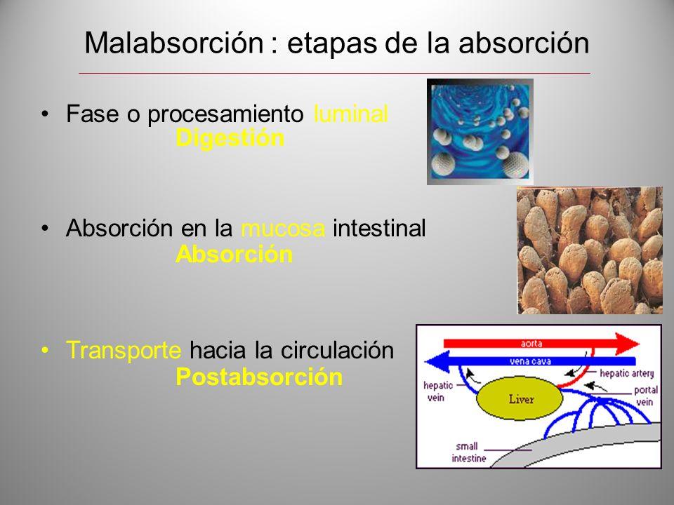 Malabsorción : etapas de la absorción Fase o procesamiento luminal Digestión Absorción en la mucosa intestinal Absorción Transporte hacia la circulaci