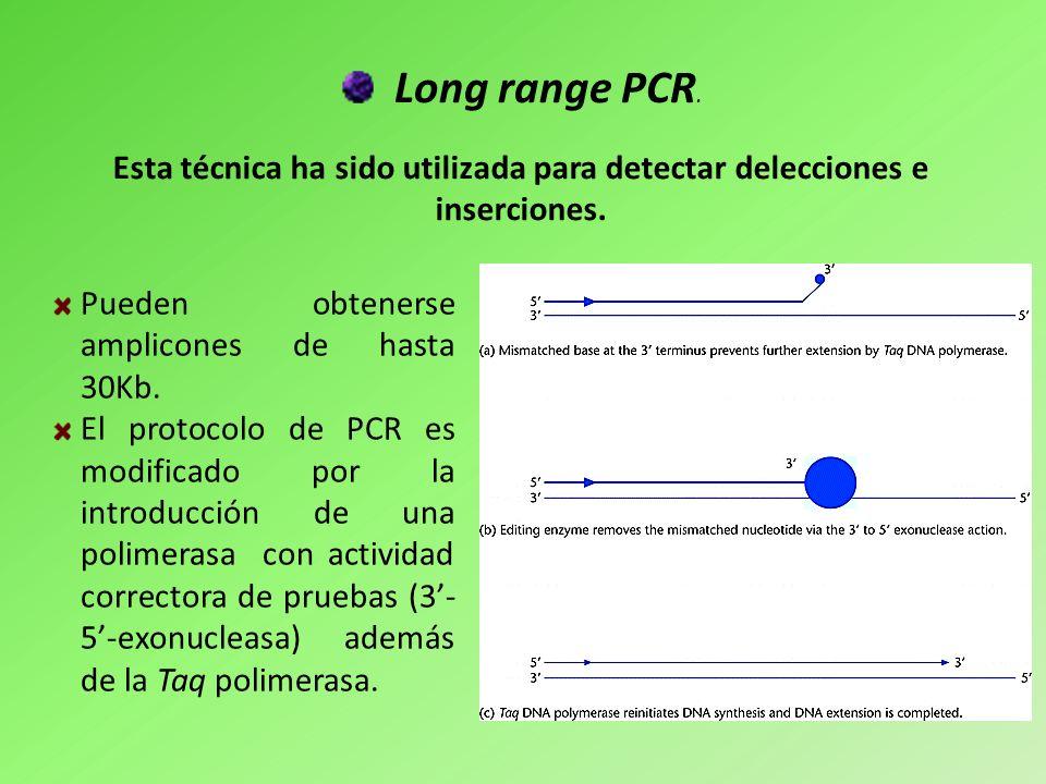 Long range PCR. Esta técnica ha sido utilizada para detectar delecciones e inserciones. Pueden obtenerse amplicones de hasta 30Kb. El protocolo de PCR