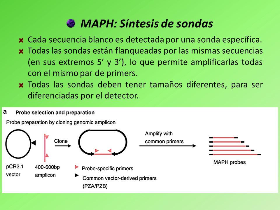 MAPH: Síntesis de sondas Cada secuencia blanco es detectada por una sonda específica. Todas las sondas están flanqueadas por las mismas secuencias (en